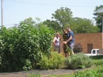 Inspecting the garden